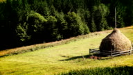 Coniferous forest and haymaking video