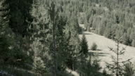 Coniferous forest in Rila mountains video
