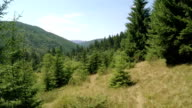 Coniferous Forest on the Hills. Aerial Video video