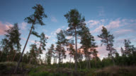 TIME LAPSE: Coniferous Forest video