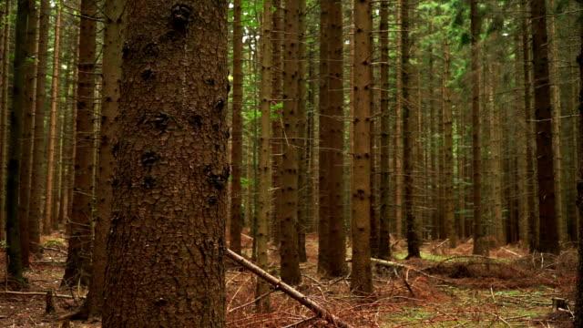 Coniferous Forest video