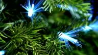 Coniferous Tree with Blue Fiber video