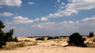 Coniferous trees in the desert video