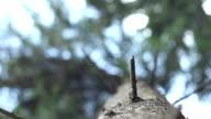 Coniferous Trunk View video