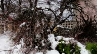 Consequences of a snow storm in spring. Broken flowering trees, snowy branches, snow and flowers, snowfall, climate change video