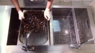 Cook in gloves mix washed cleaned mussels in colander. Plastic transparent container. Restaurant video