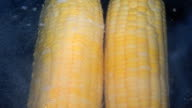 Cooking corn on the cob recipe. The corn is placed in boiling salted water video