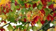 Cool Fall Breeze HD DSLR video