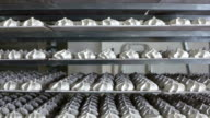 Cooling racks with finished marshmallow zephyr on trays at confectionery factory video