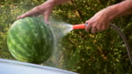 HD: Cooling watermelon video