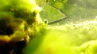 Copperhead under water video