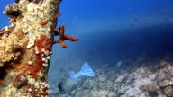 Coral And Fish video