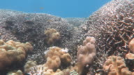Coral and tropical fish video