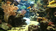 Coral colony on the reef video