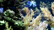 Coral colony video