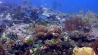 Coral garden 2 video
