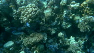 Coral Reef and Its Habitants video