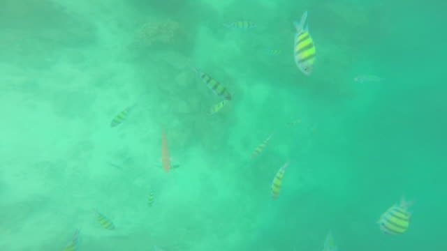 coral reef and sea fish video