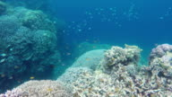 Coral reef and tropical Fish video