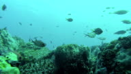 Coral Reef Bommie With Fish video