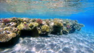 Coral reef in shallow water on Red Sea / Egypt video