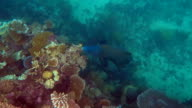 Coral reef marine life at the Great Barrier Reef Queensland Australia video
