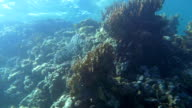 Coral Reef near the Water Surface video