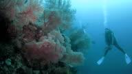 Coral reef of Raja Ampat, Indonesia video