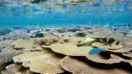 Coral reef on Maldives - South Ari Atoll video