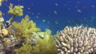 Coral reef scene. video
