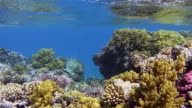 Coral reef sea life with lot of tropical Fish / Red Sea video