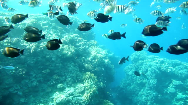 Coral reef, Sharm El Sheikh. Egypt video