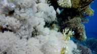 Coral reef, tropical fish. Warm ocean and clear water. Underwater world. video