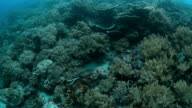 Coral reef, tropical sea video