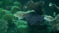 Coral reef video