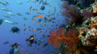 coral reef wall video