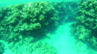 Coral Reefs in the Red Sea, Egypt video