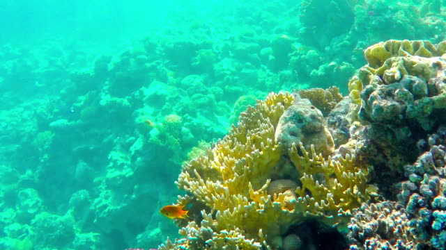 Coral reefs video
