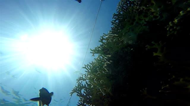 Corals from below, Sun in Sea, Static Scene, Red Sea video