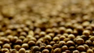Coriander seeds. video