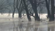 cormorants and ducks in the lagoon video