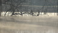 cormorants in the cold morning video