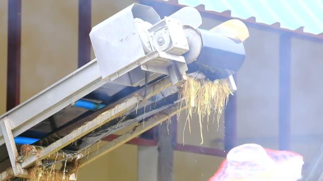 Corn Conveyor Belt video