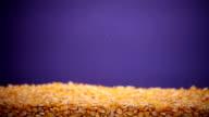 corn fall video