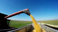Corn Falling from Combine Auger into Tractor Trailer video