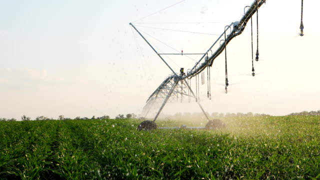 Corn Field With Irrigation System video