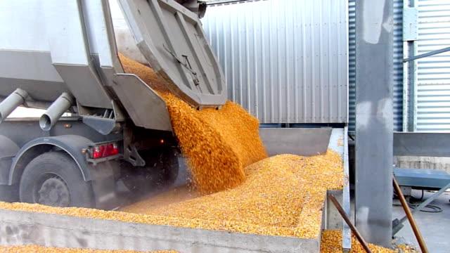 Corn grain in a silo video