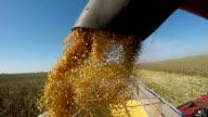 Corn Harvest Unload into Semi Trailer video