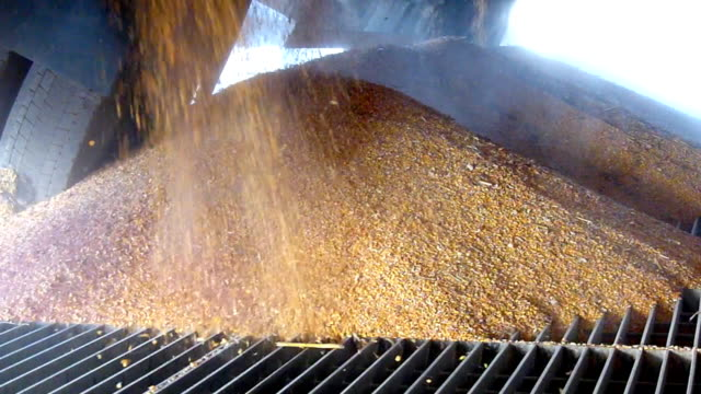 Corn in a silo, slow motion video
