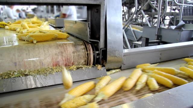Corn on Production Line video